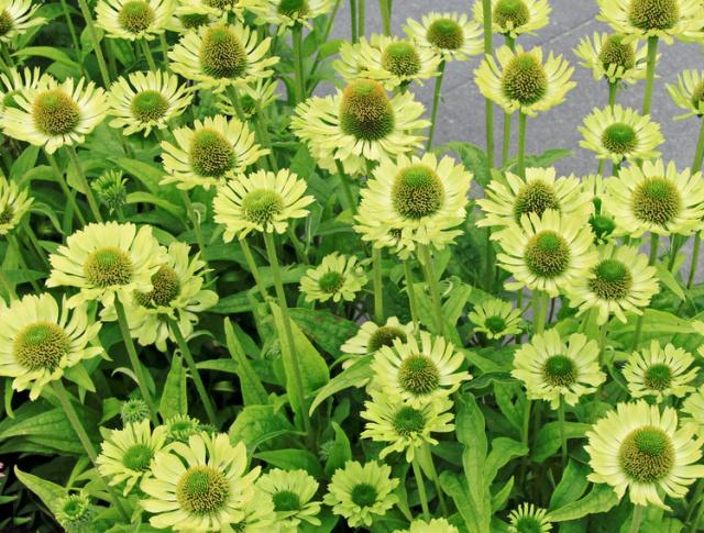 garden show plants. Black Bedroom Furniture Sets. Home Design Ideas